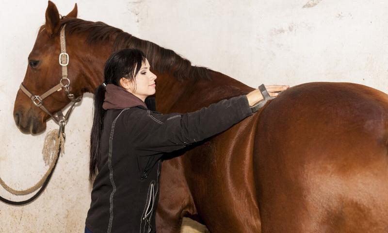 Опасна ли пыль при чистке лошади? - фото 01-5-1-4, главная Содержание лошади , конный журнал EquiLIfe