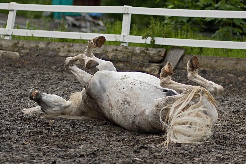 Опасна ли пыль при чистке лошади? - фото 01-5-1-5, главная Содержание лошади , конный журнал EquiLIfe