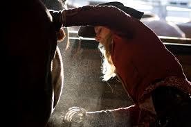 Опасна ли пыль при чистке лошади? - фото 01-5-1-7, главная Содержание лошади , конный журнал EquiLIfe