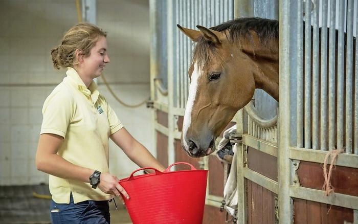 ТЕСТ: Какой вкус выбирают лошади? - фото 01-5, главная Рацион , конный журнал EquiLIfe