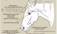 Признаки боли у лошади