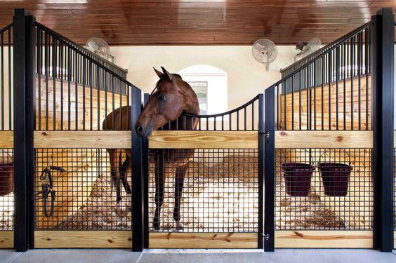 Слоуфидер или медленная кормушка для лошадей - фото 0c460642655264fe2431c7dc64d6a417, главная Здоровье лошади Интервью Рацион Содержание лошади , конный журнал EquiLIfe