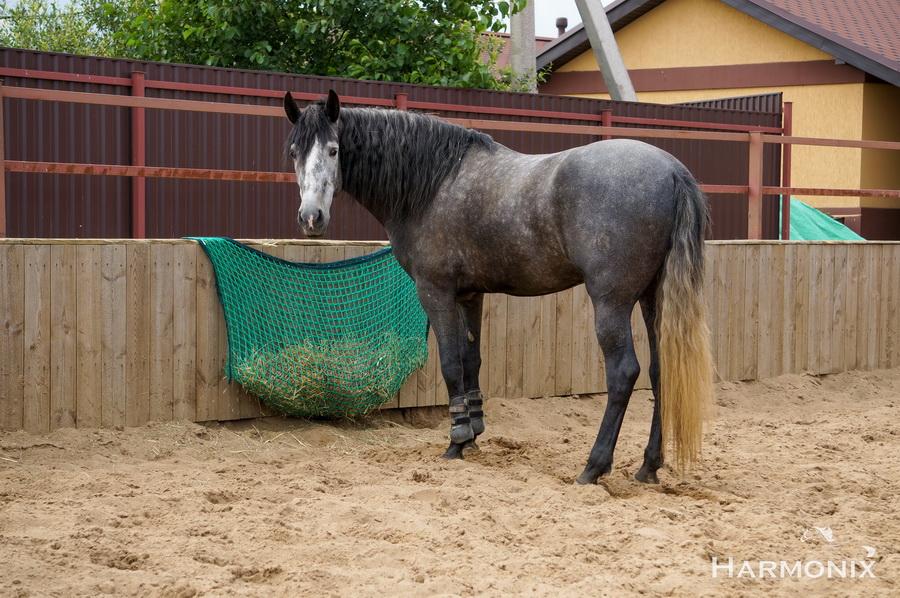 Слоуфидер или медленная кормушка для лошадей - фото 3CCB35B9-5297-45FE-A149-B44267B110EB-05-02-20-05-28-2, Recommendation Здоровье лошади Интервью Рацион Содержание лошади , конный журнал EquiLIfe