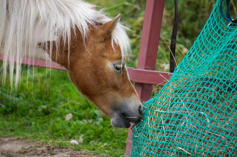 Слоуфидер или медленная кормушка для лошадей - фото B_nGY5iZvy8, главная Здоровье лошади Интервью Рацион Содержание лошади , конный журнал EquiLIfe