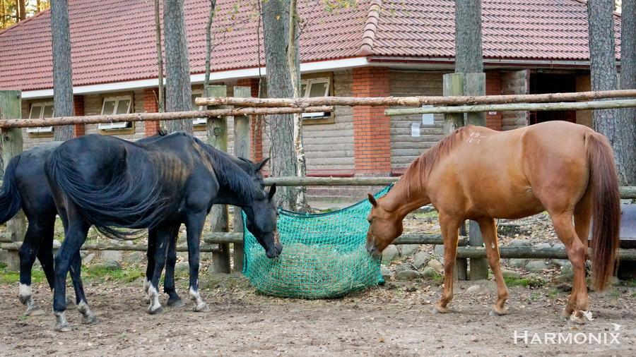 Слоуфидер или медленная кормушка для лошадей - фото DSC00935-2, главная Здоровье лошади Интервью Рацион Содержание лошади , конный журнал EquiLIfe