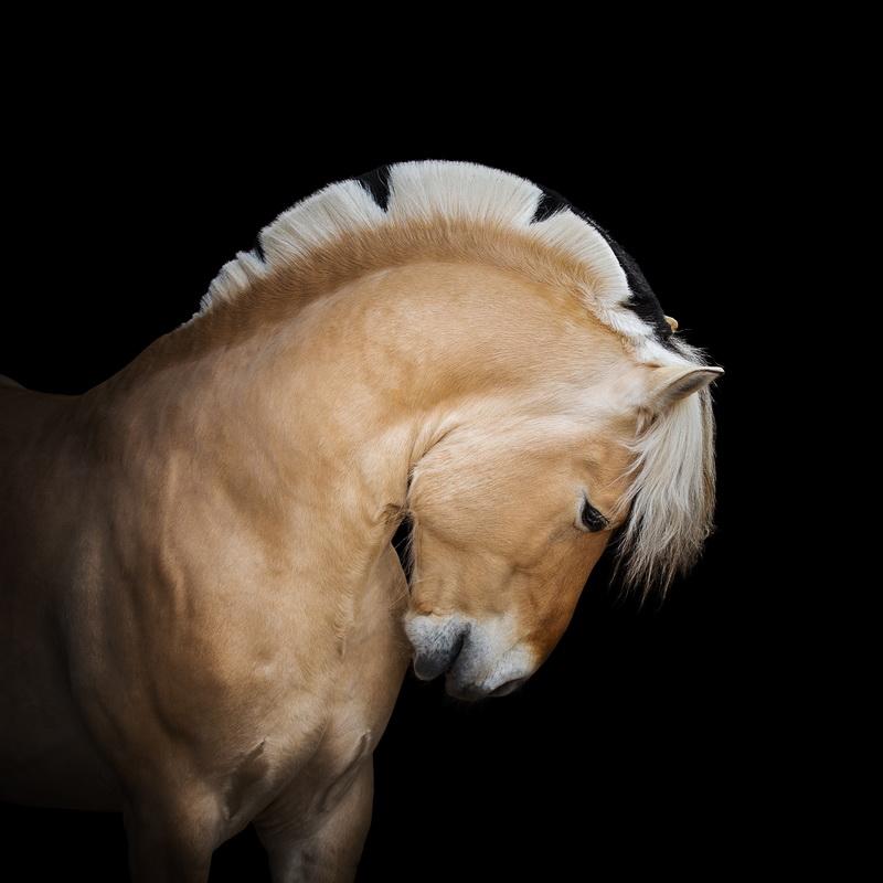 Нина Филатова: Путь на «Эквитану» - фото FJ9A5911, главная Конные истории , конный журнал EquiLIfe