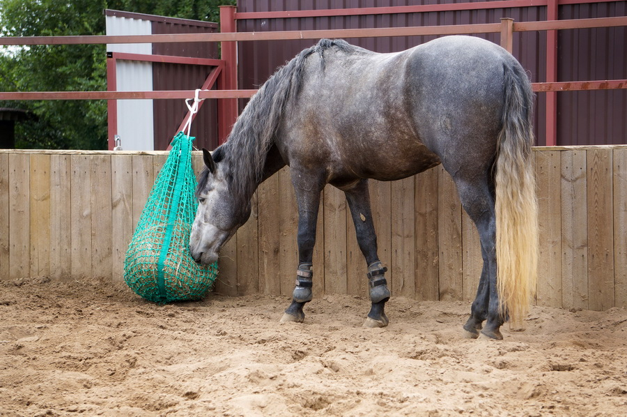 Слоуфидер или медленная кормушка для лошадей - фото IMG_6030-14-08-19-01-40, главная Здоровье лошади Интервью Рацион Содержание лошади , конный журнал EquiLIfe