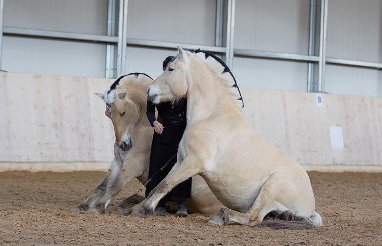 Нина Филатова: Путь на «Эквитану» - фото IMG_6879, главная Конные истории , конный журнал EquiLIfe