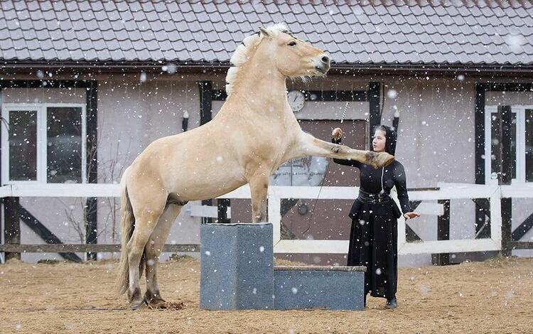 Нина Филатова: Путь на «Эквитану» - фото IMG_7148, главная Конные истории , конный журнал EquiLIfe