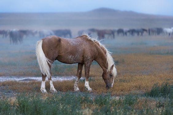 Слоуфидер или медленная кормушка для лошадей - фото cd4c807744a0c696715e774e006a1a28, Recommendation Здоровье лошади Интервью Рацион Содержание лошади , конный журнал EquiLIfe
