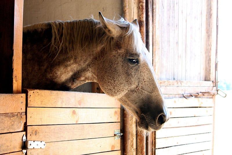 Признаки боли у лошадей - фото depressed-horse-in-stall-web, главная Здоровье лошади Поведение лошади , конный журнал EquiLIfe