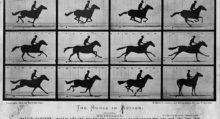 лошадь в движении1