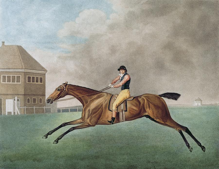 """Кадры """"лошадь в движении"""" (The Horse in Motion) от Эдварда Мейбриджа - фото -в-движении2, главная Разное , конный журнал EquiLIfe"""