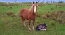 Колики: нужна ли операция? - фото -копытце-220x119, Recommendation главная Здоровье лошади Новости , конный журнал EquiLIfe