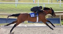 Лошади понимают намерения человека - фото 3f4fe365ab2b4c58a8b799eef9682154-220x119, главная Интересное о лошади Новости Поведение лошади , конный журнал EquiLIfe