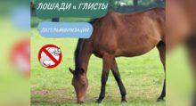 Лошади понимают намерения человека - фото 59D112BA-CF68-4F99-8E5A-D4CB948C147C-220x119, главная Интересное о лошади Новости Поведение лошади , конный журнал EquiLIfe