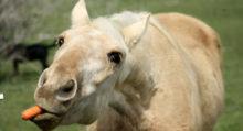 Лошади понимают намерения человека - фото AD624DC3-F447-4A6F-8FF5-4E05732B0FD8-220x119, главная Интересное о лошади Новости Поведение лошади , конный журнал EquiLIfe
