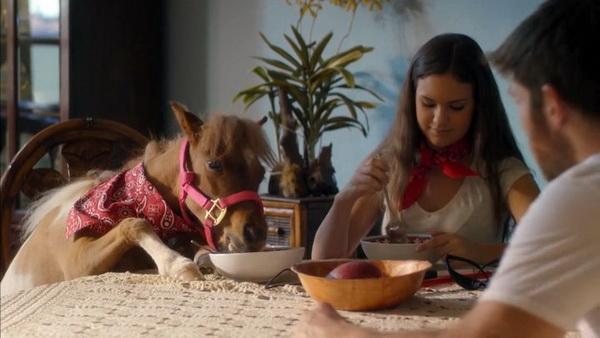 Лучшие фильмы про лошадей за последние 5 лет - фото Apple-of-My-Eye, главная Фильмы про лошадей , конный журнал EquiLIfe