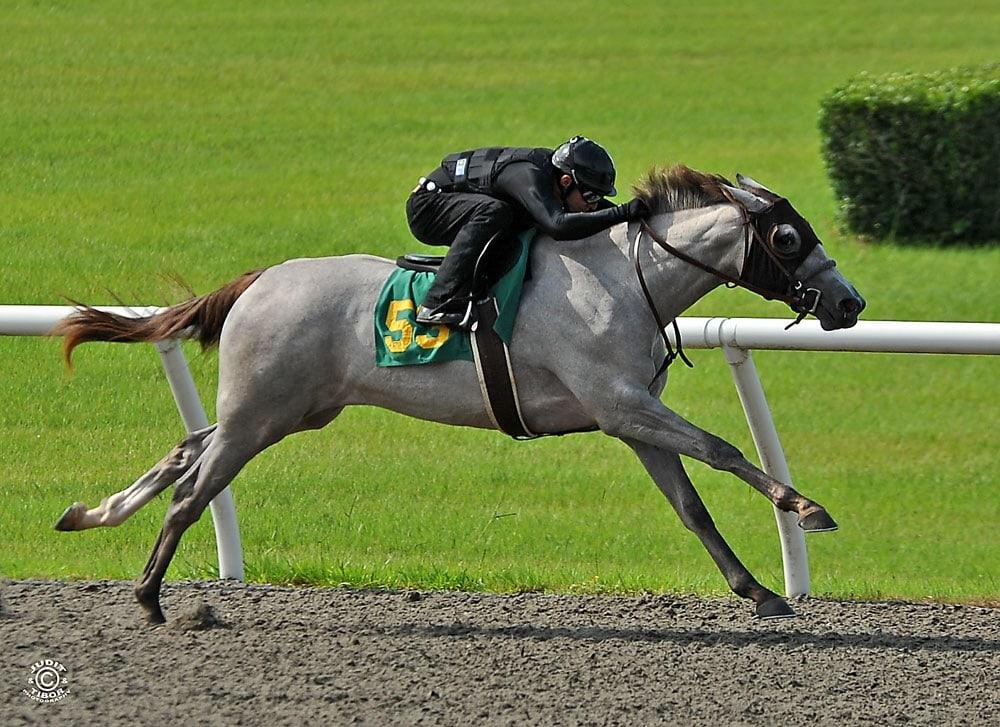 Чистокровная верховая (английская скаковая) порода - фото Breeze-shot1, главная породы лошадей , конный журнал EquiLIfe
