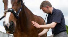 Лошади понимают намерения человека - фото D4A3D82D-4691-41B5-BABE-1209BA135327-220x119, главная Интересное о лошади Новости Поведение лошади , конный журнал EquiLIfe