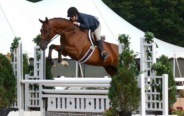 Чистокровная верховая (английская скаковая) порода - фото Lexington-Ave.jpg__760x480_q85_crop_subsampling-2_upscale, главная породы лошадей , конный журнал EquiLIfe