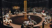 Спешите увидеть шоу Battuta (2006) от Equestrian Theater Zingaro - фото ba3-220x119, главная Новости События , конный журнал EquiLIfe