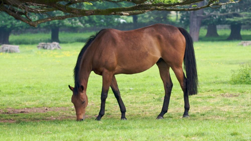Лошади и глисты - фото image-3-e1617012676141, главная Здоровье лошади Новости Пастбище , конный журнал EquiLIfe
