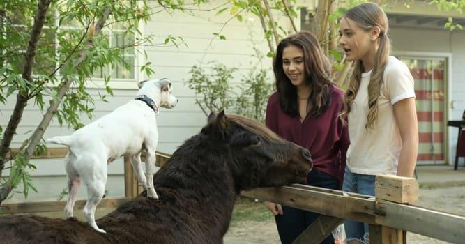Лучшие фильмы про лошадей за последние 5 лет - фото priklyucheniya-dolli-i-spanki, главная Фильмы про лошадей , конный журнал EquiLIfe