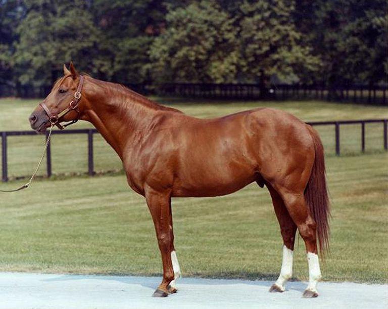 Чистокровная верховая (английская скаковая) порода - фото secretariat-hancock-56a4da855f9b58b7d0d98806, главная породы лошадей , конный журнал EquiLIfe