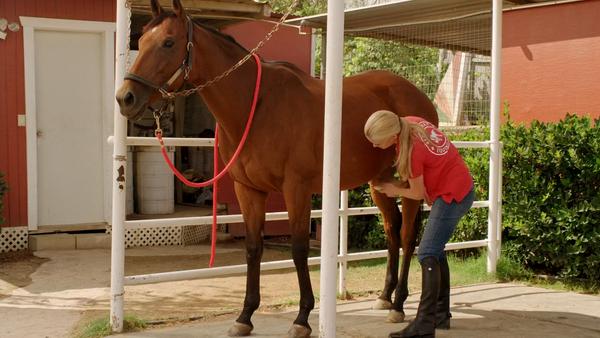 Лучшие фильмы про лошадей за последние 5 лет - фото shans-emmy, главная Фильмы про лошадей , конный журнал EquiLIfe
