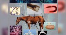 Лошади понимают намерения человека - фото 978B32A4-10FB-43D2-A042-A95D8931A805-220x119, главная Интересное о лошади Новости Поведение лошади , конный журнал EquiLIfe