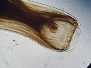 Борьба с паразитами - фото image-300x225, главная Здоровье лошади Новости , конный журнал EquiLIfe