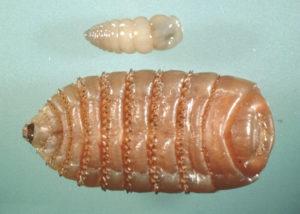 Борьба с паразитами - фото image-5-300x214, главная Здоровье лошади Новости , конный журнал EquiLIfe