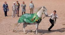 Лучшие фильмы про лошадей за последние 5 лет - фото -20210611151248_HIP_2790-220x119, главная Фильмы про лошадей , конный журнал EquiLIfe