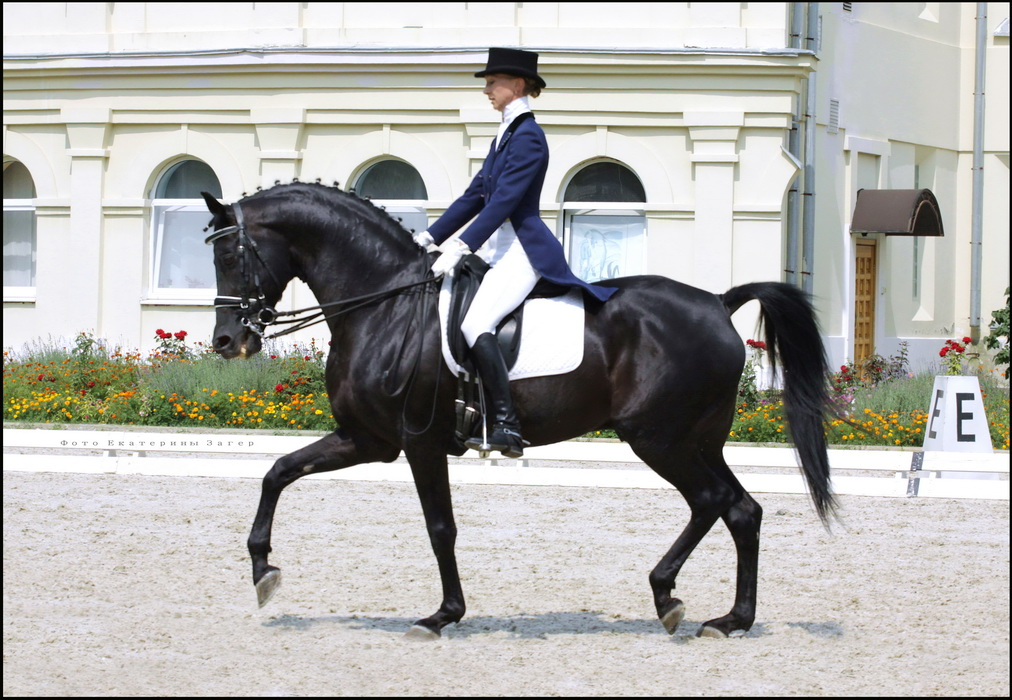 Русская верховая порода - фото img_7614k, Recommendation породы лошадей , конный журнал EquiLIfe
